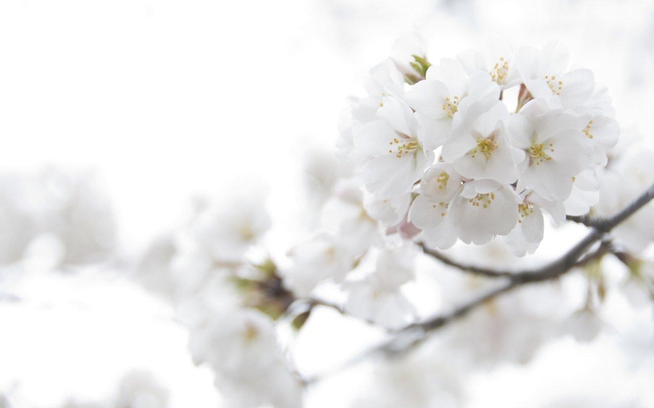 flores-en-flor